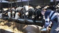 U 2021. godini zabilježen rast primarne stočarske proizvodnje