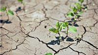 Zbog suše proglašena prirodna nepogoda za područje cijele Virovitičko-podravske županije