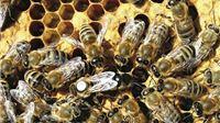 Pravilnik za Program potpore pčelarima vrijedan 3 milijuna kuna u e-savjetovanju