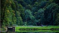 Rujan u Park šumi Jankovac