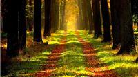 Objavljen novi javni poziv za dugoročni zakup šumskog zemljišta