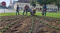 Nove maćuhice, potočnice, tratinčice, jaglaci i tulipani
