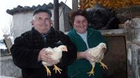 Ptičja gripa, dva mjeseca poslije